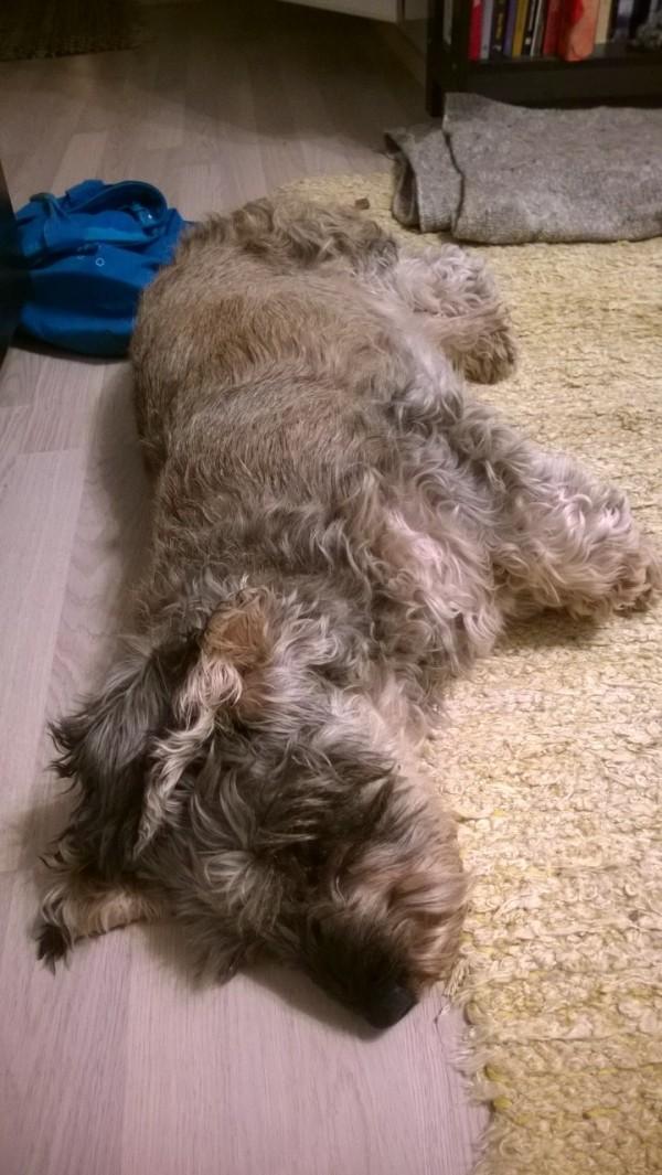 Dog Poop Inside House
