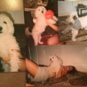 montage of dog photos
