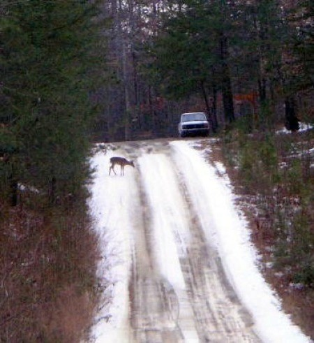 deer on snowy road