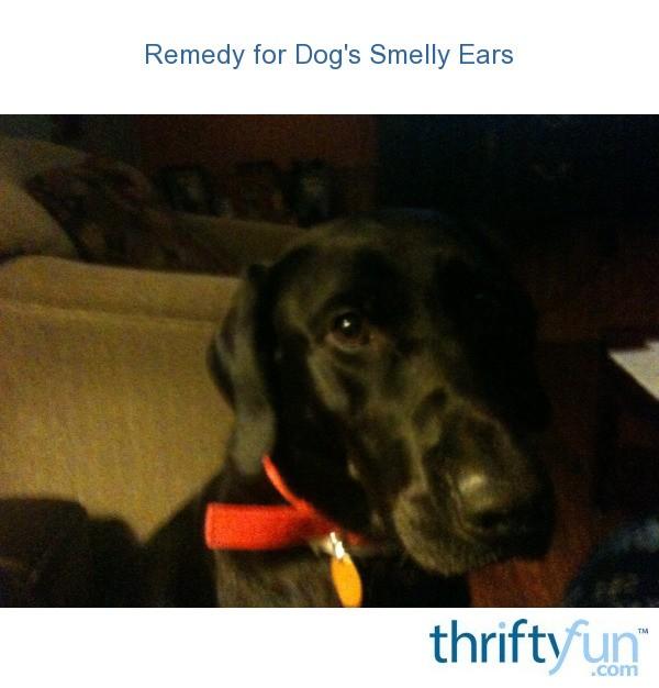 Black Ear Wax Buildup In Dogs