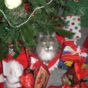 Fuzzy under the tree among the gifts
