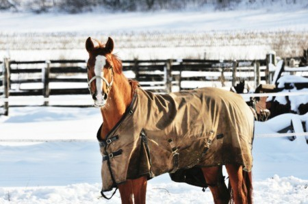 horse wearing a blanket in corral in winter