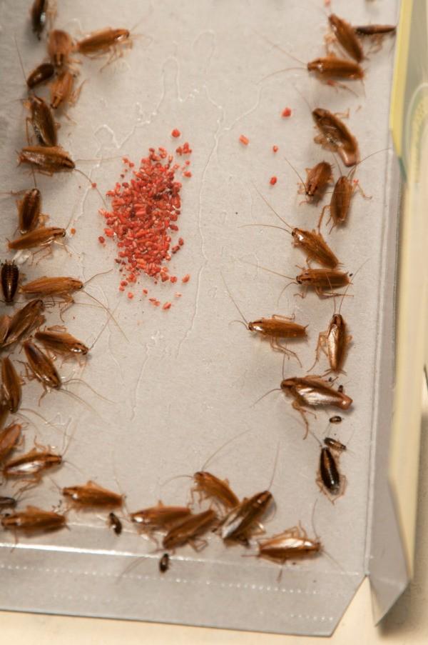 Making a Homemade Roach Trap | ThriftyFun
