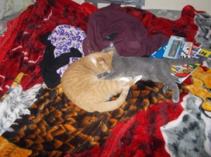 orange tabby and grey cats sleeping together
