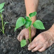 Planting A Row For The Hungry