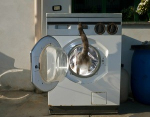 Cat Getting in Washer