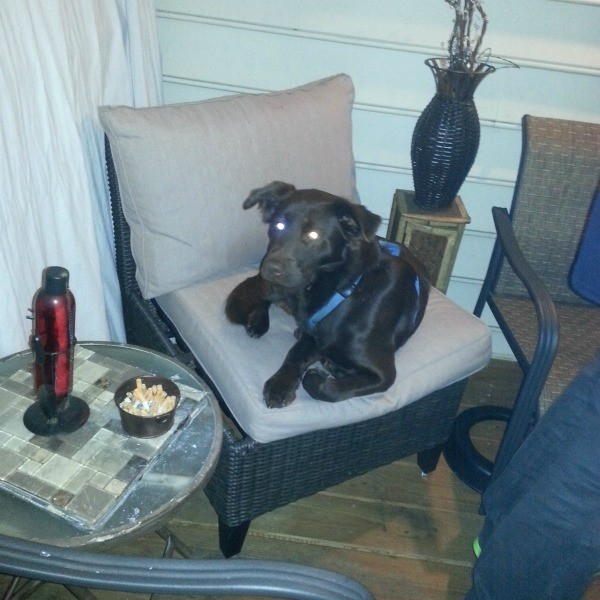 black dog lying on chair