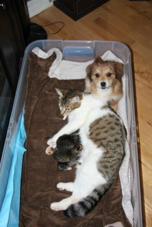 cat with kittens and small dog in plastic box
