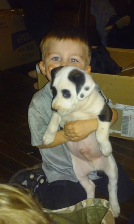 young boy holding a white puppy with black markings