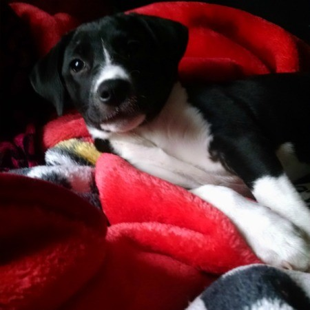 black and white puppy on red blanket