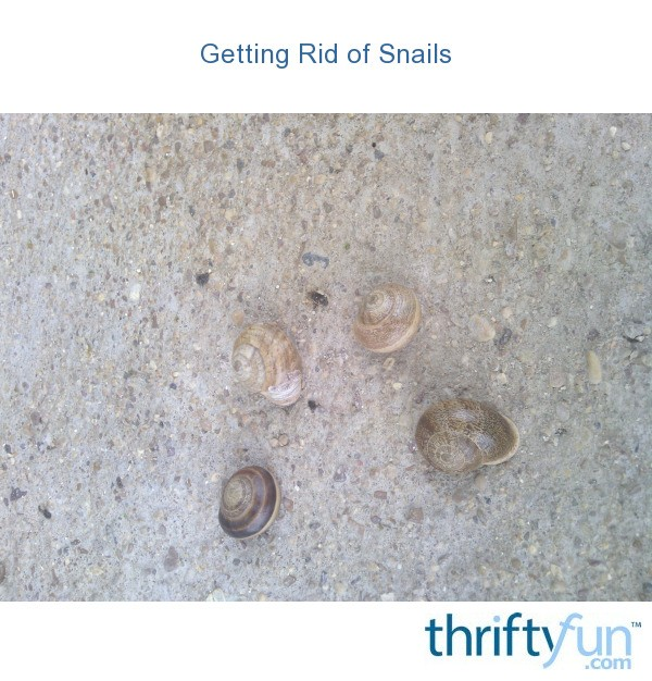 Getting Rid Of Snails Thriftyfun