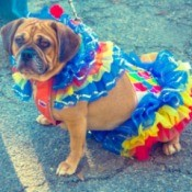 dog in clown suit