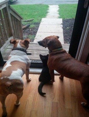 two dogs and a kitten at the sliding door