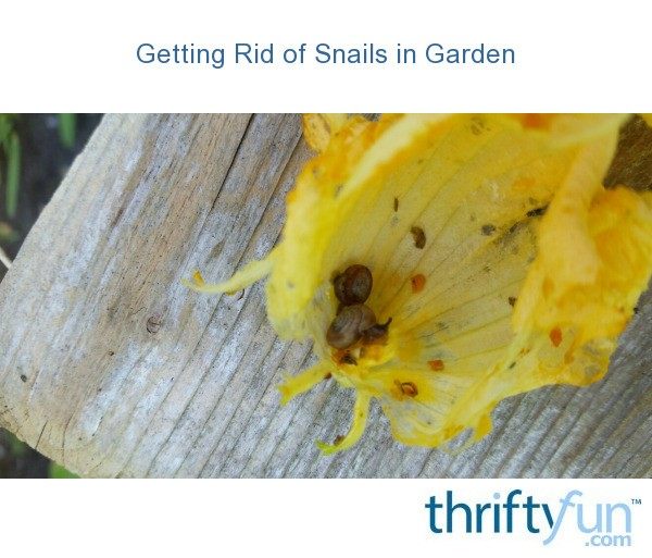 Getting Rid Of Snails In Garden Thriftyfun