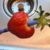 A strawberry with a straw used for removing the tops.