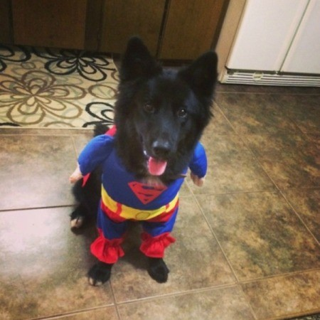 wearing a Superman costume