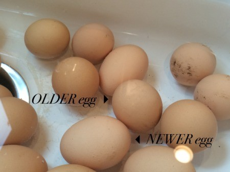 Checking Eggs for Freshness