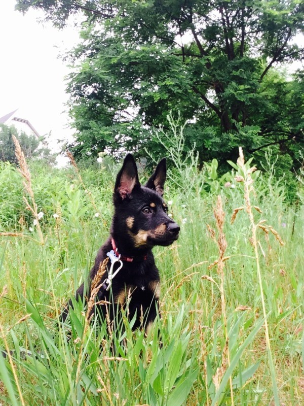 dog siting in the tall grass