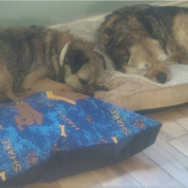 terriers lying on dog bed