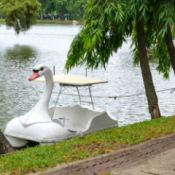 white swan paddle boat on lake or lagoon