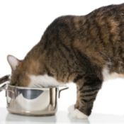 cat stealing food from cooking pot
