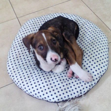 puppy on dog bed