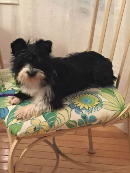 black and white dog on chair cushion