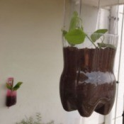 Upcycled Soda Bottle as Hanging Planter