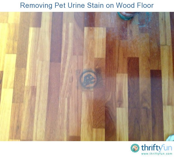 how to get old pet poop stains out of carpet