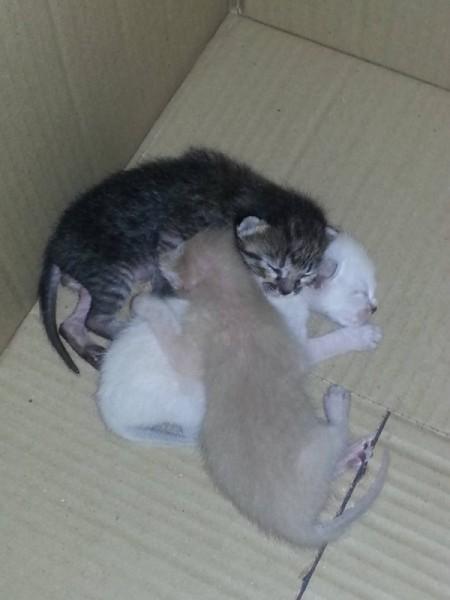 kittens in cardboard box