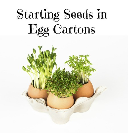 Seed starts in Egg Carton