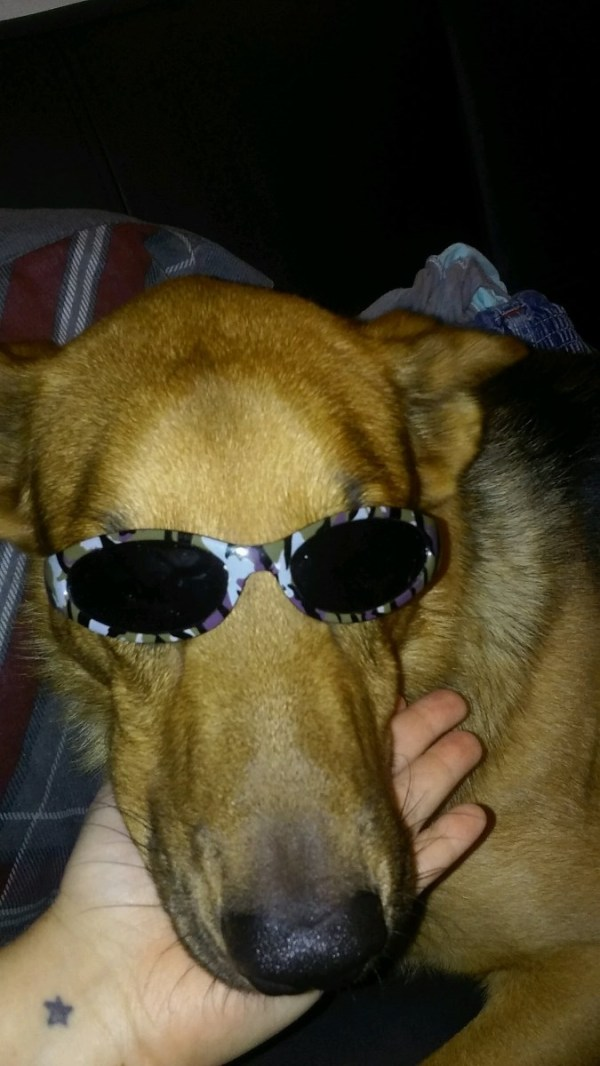 light brown dog wearing sunglasses