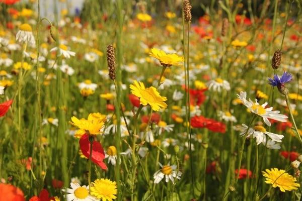 Growing Wildflowers Thriftyfun