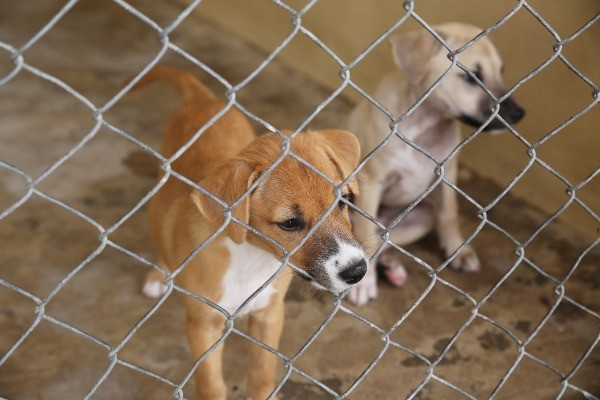 puppies awaiting adoption at shelter