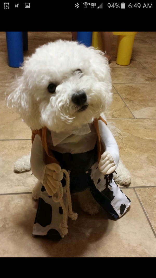 white dog in costume