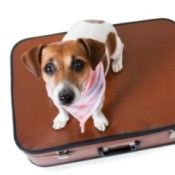 small dog sitting on a  suitcase