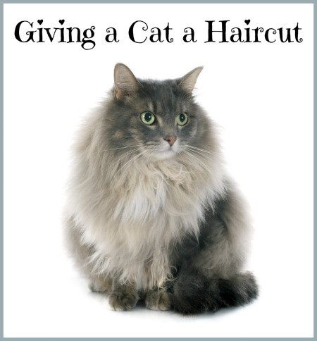 Giving a Cat a Haircut