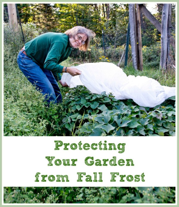 Protecting Your Garden from Fall Frost