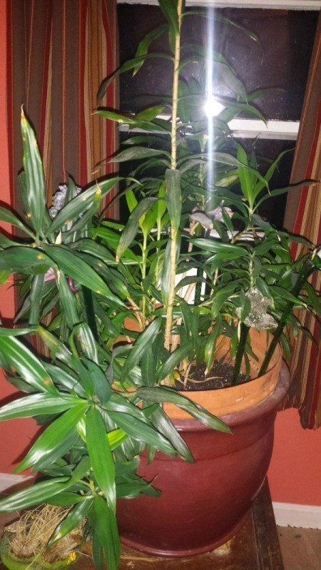 bamboo style house plant