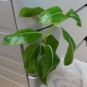 What Is This Houseplant?