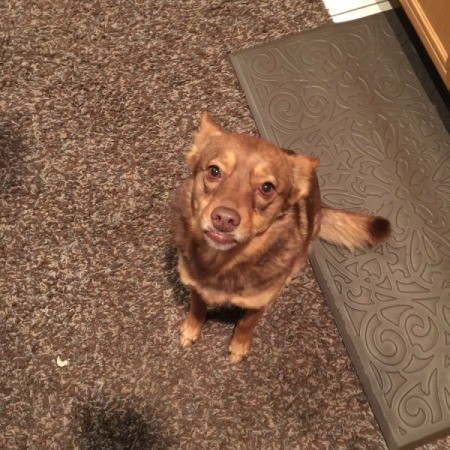 reddish dog on carpet runner