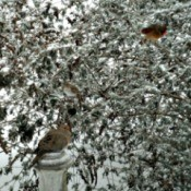 birds in winter butterfly bush