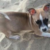 Monchi in the sand