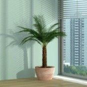 palm near window