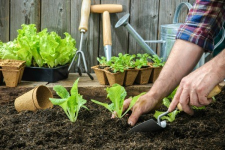 Tools to Make Planting and Sowing Easier