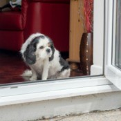 Small dog sitting inside of an open door with head lowered