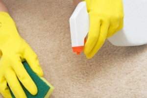 Hands wearing yellow rubber gloves hold spray bottle and sponge to remove stain from beige colored carpet