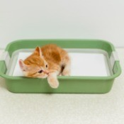 Kitten laying in a litter box with it's head resting on the edge