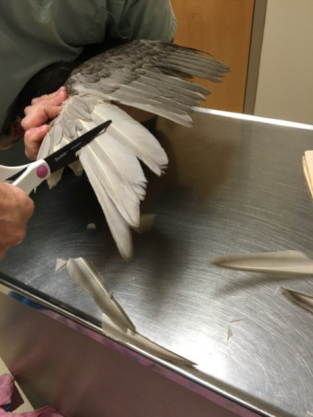 Clipping a Duck's Wings