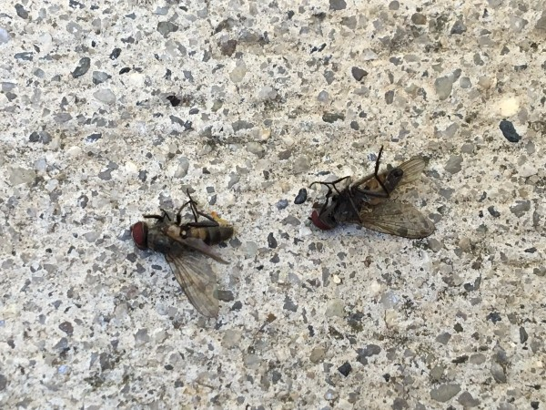 small nonbiting flying insects. Identifying Flying Insects   ThriftyFun